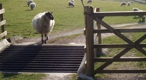 Biden cattle guards